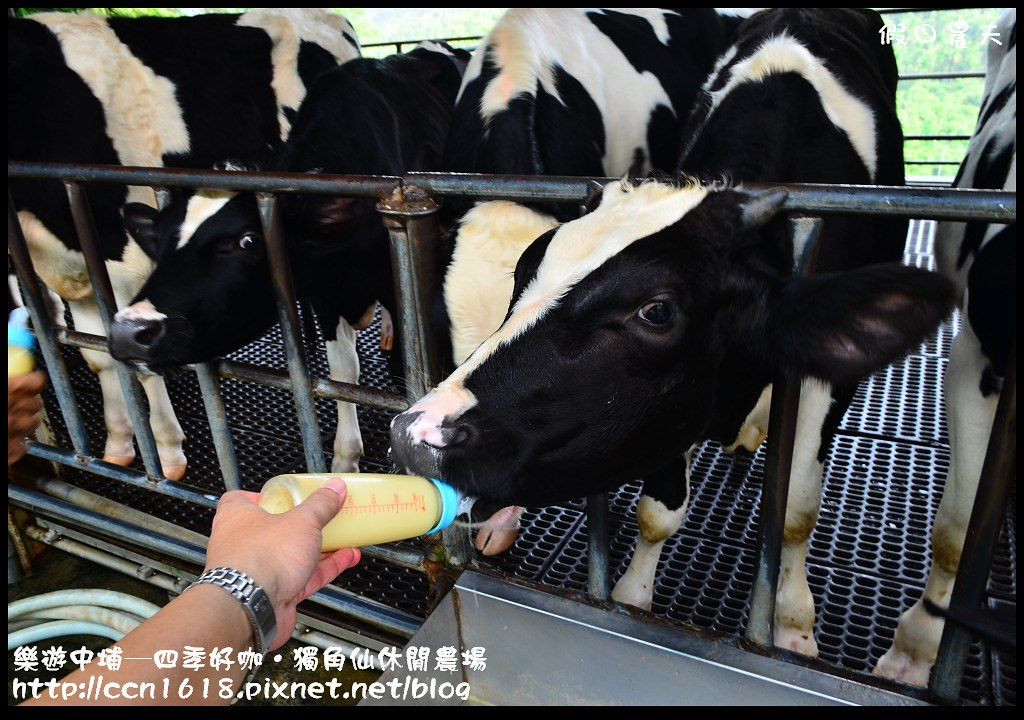 樂遊中埔─四季好咖‧獨角仙休閒農場DSC_3838