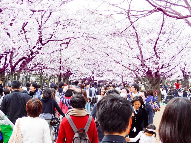 Hanami at Yoyogi Park 2013