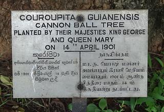 Sri Lanka. Kandy. Jardín Botánico. Peradeniya Botanic Gardens.