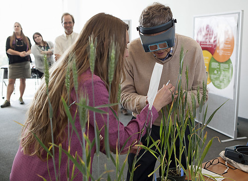 Bill Gates learns to pollinate wheat from Cornell University assistant professor Jessica Rutkoski, while ARS geneticist Edward Buckler looks on. Photo credit: Robert Barker, Cornell University.
