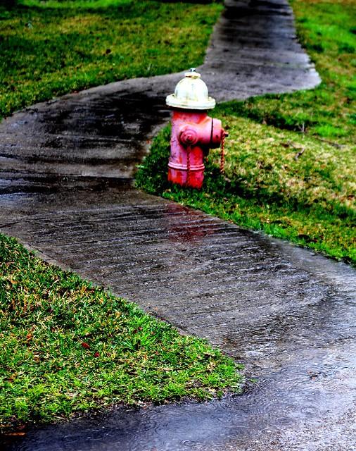 Wet sidewalk and Fireplug