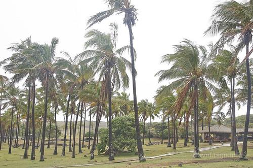 【写真】2015 世界一周 : アナケナビーチ/2021-04-05/PICT8639