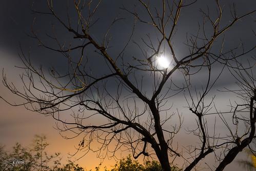 Luna entre las ramas 2