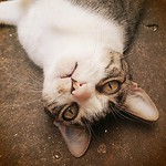 ❤❤❤ #nickie #catlovers