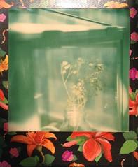 ░ Polaroid