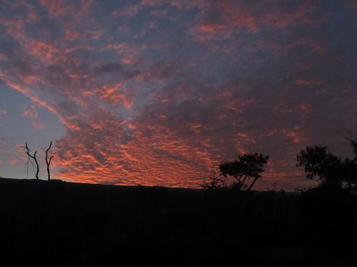 life morning trees sky nature ecology silhouette clouds sunrise outdoors island dawn hawaii polynesia east tropical bigisland kona sunup ecosystem 2015 honaunau hawaiicounty southkona hawaiiisland honaunaubay westhawaii barryfackler barronfackler