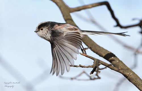 ltt Going like the clappers