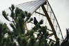 Crows and Frank Gehry