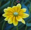 Botanic Gardnes-065