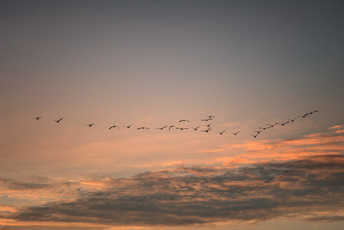 birds clouds colorful dusk landscape light nature outdoor sky sunset color