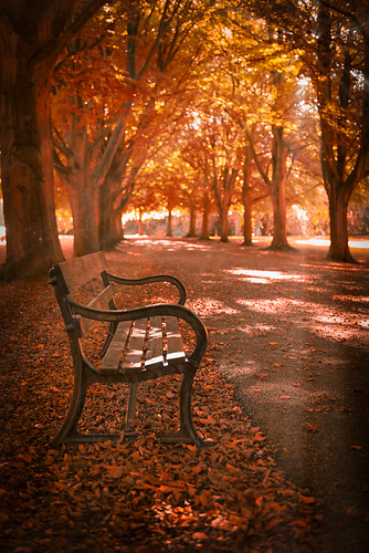 park autumn light brown mist color art fall nature leaves dark bench landscape outdoors photo haze image path nobody fairy rays pathway enigmatic
