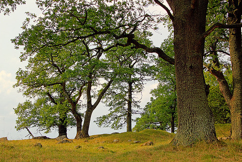 trees light summer favorite white inspiration black color tree green slr art nature beautiful beauty grass yellow composition digital forest canon season landscape photography eos evening photo nice oak scenery europe flickr branch afternoon seasons view image sweden hill great scenic picture july overcast best hills foliage photograph scenary views land sverige dslr capture oaks province 550d timlindstedt
