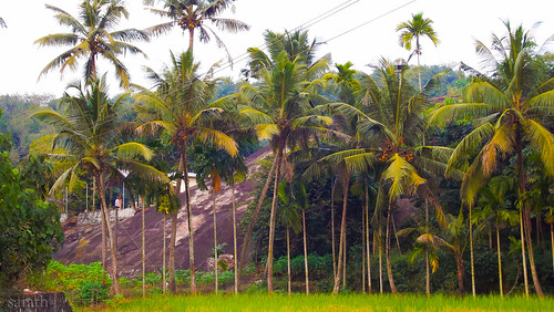 rock coconut country hill rocky kerala gods own