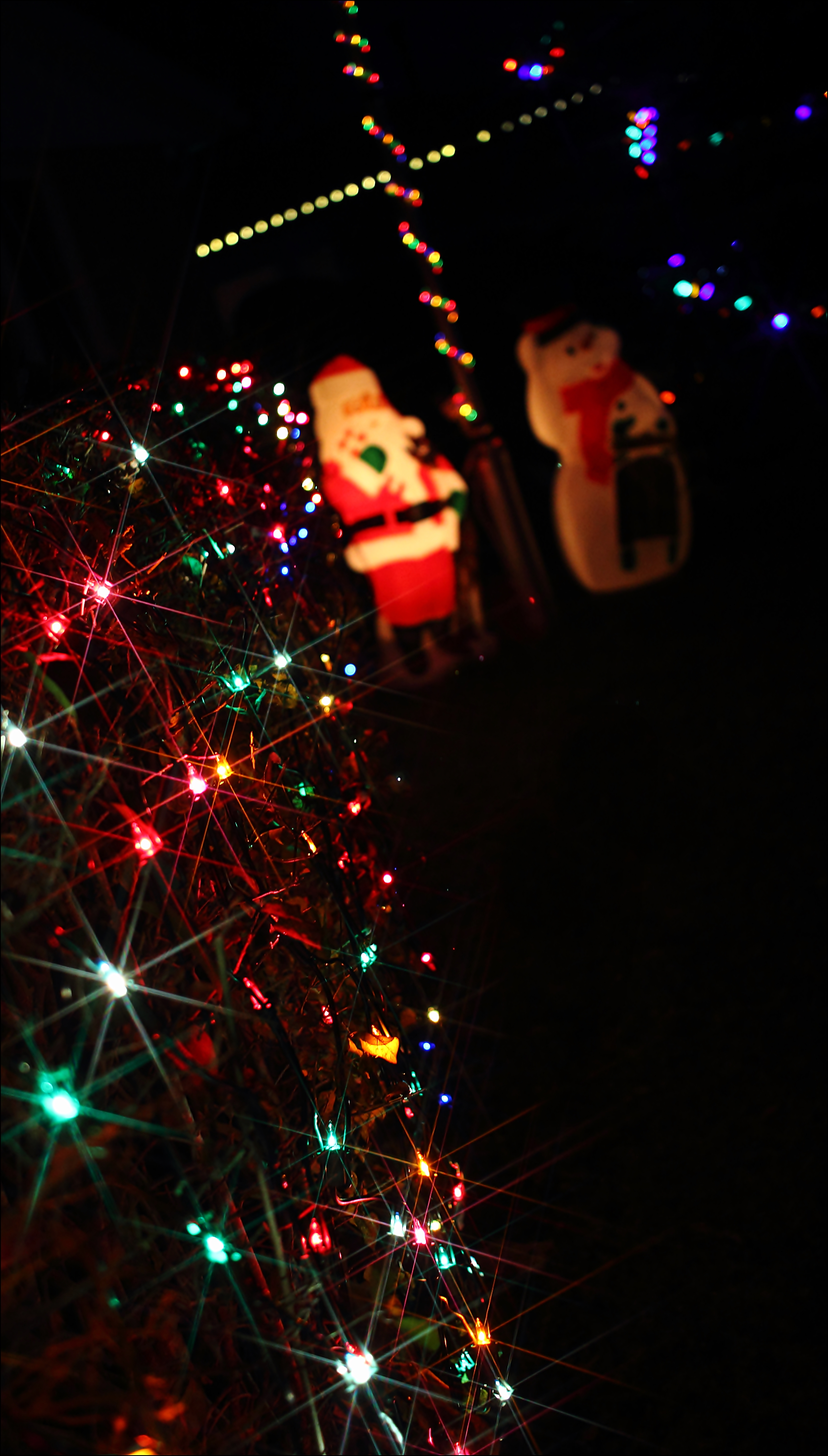 Putting Up The Christmas Lights: We Had The Warmest Temps. In Canada Today. christmas, canon, lights, 60d, warmesttemps. buy photo