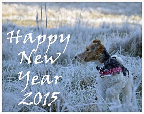 new dog happy scenery sweden schweden year terrier wish foxterrier 2015 wirefoxterrier swedennature scenicsnotjustlandscapes schwedish fiasigrid