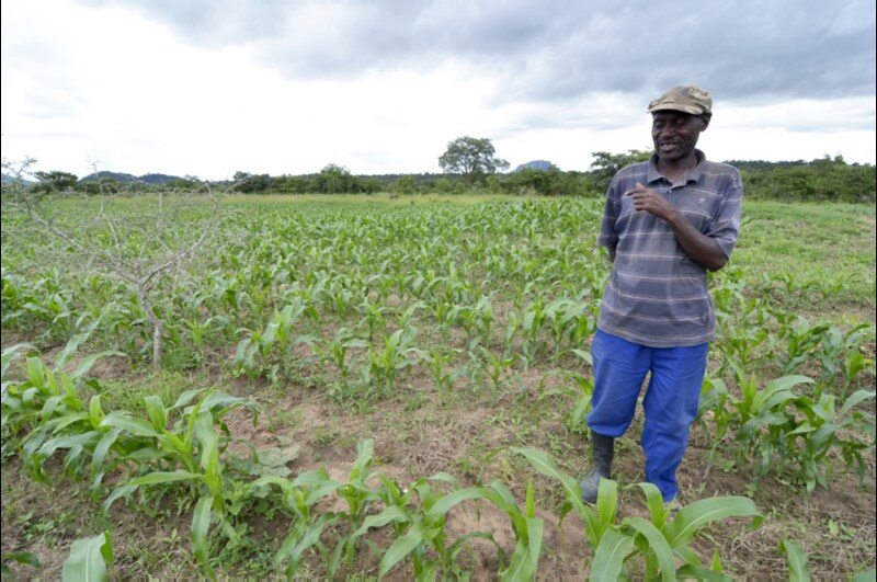Damiano Tembo talking about his latest crop of maize under SIMLEZA-Africa RISING, which he expects to be even better than last season's harvest (Photo credit: IITA/Jeffrey Oliver)