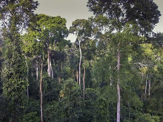 The forest from the Canopy Walkway - Kakum NP - Ghana14_IMG_0812