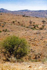 Desert near Silverton