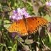 Gulf Fritillary Butterfly In My Garden 2015 - 04