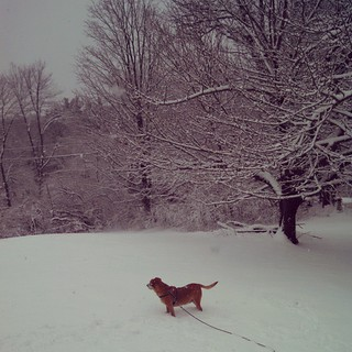 Sophie checking out the #snow #dogstagram #instadog #newhampshire #noreaster #winter #houndmix
