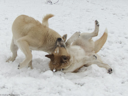 Zo doet Snowy dat!