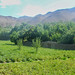 Foladi Valley Potato Farm   Bamiyan   Afghanistan