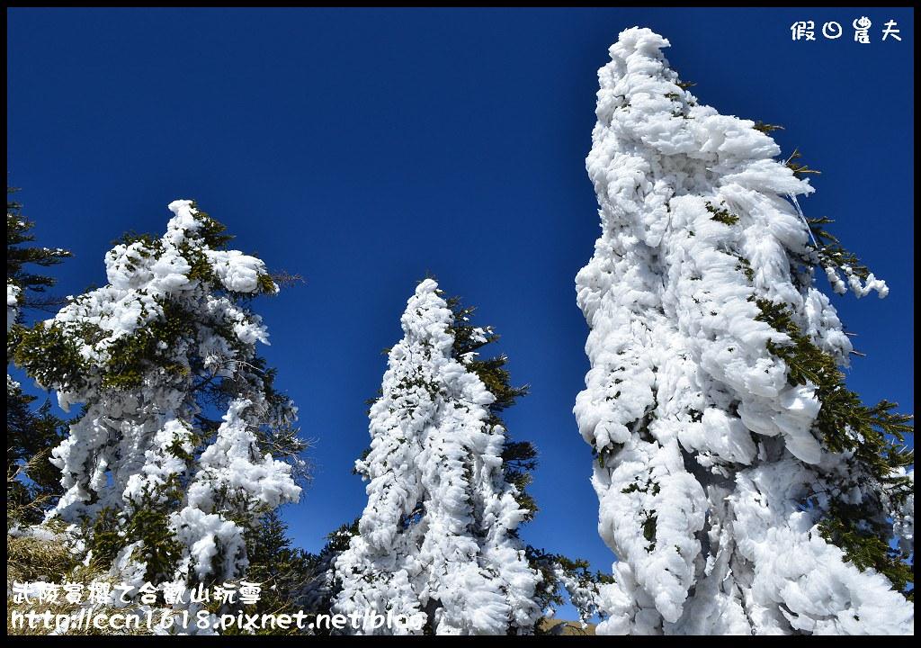 武陵賞櫻之合歡山玩雪DSC_5238