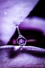 flower reflection on water drop