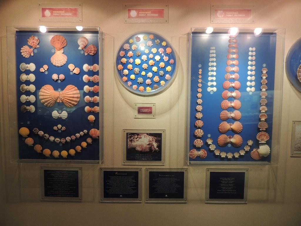 """Vaizdo rezultatas pagal užklausą """"phuket seashell museum"""""""