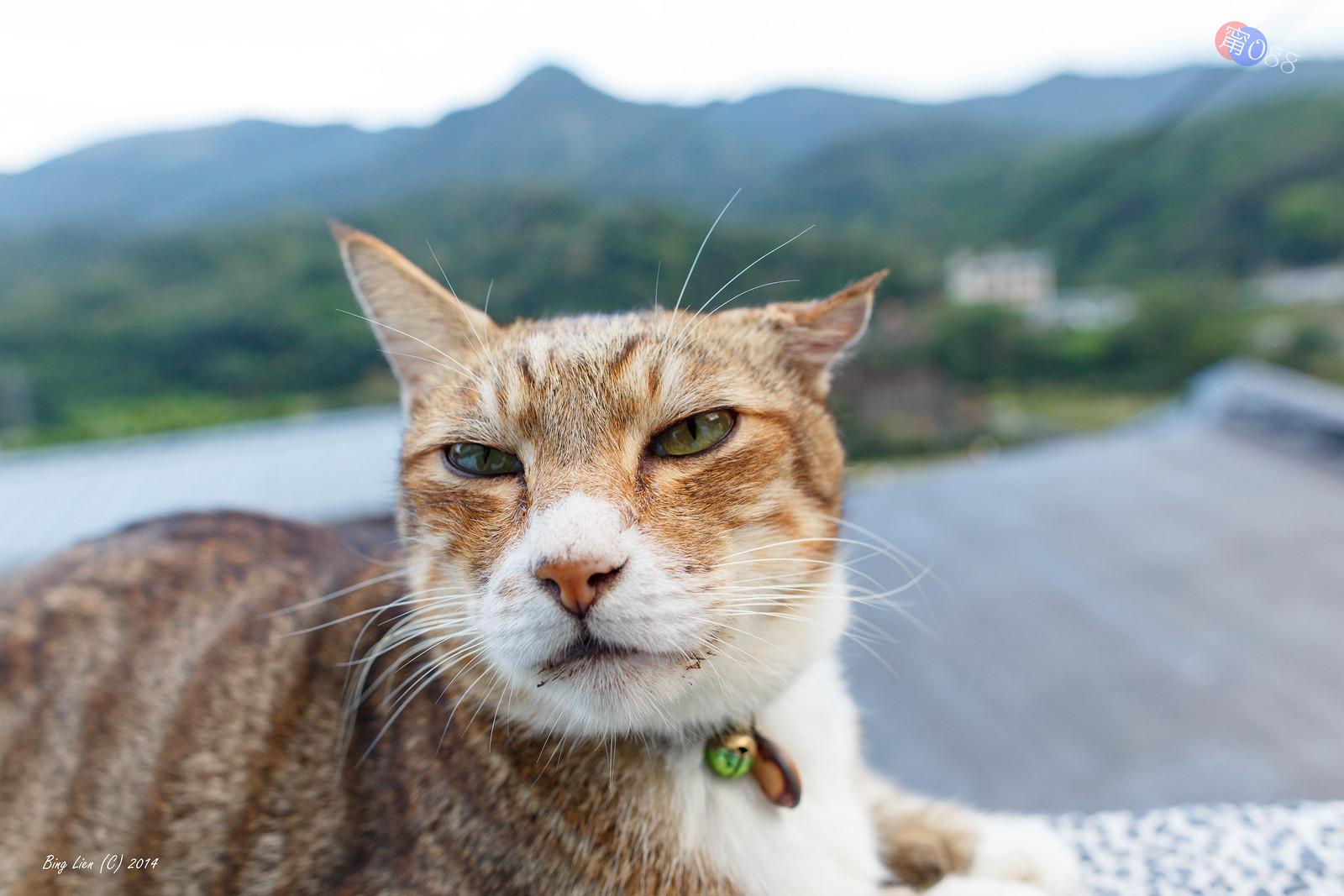 2014 猴硐‧貓咪節 (3) 貓咪集錦