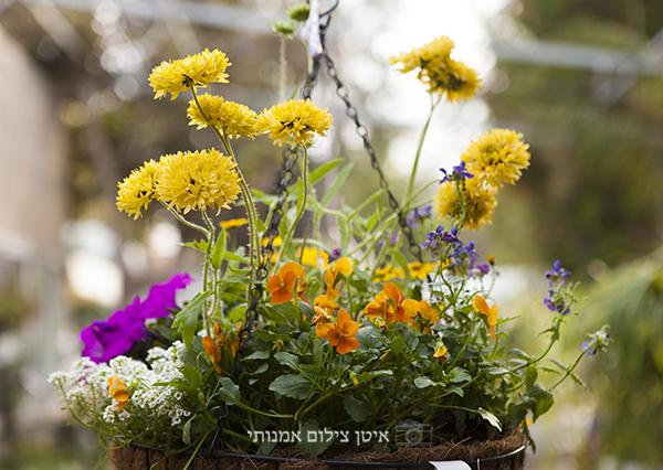 משתלת הגן הקסום רשפון, פרחים