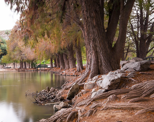 longexposure trees brown nature water landscape outside downtown fuji riverside outdoor branches roots wideangle southerncalifornia ultrawide fujinon fairmountpark apsc xt1 mirrorless remotetrigger lakeevans 10stopndfilter benrotripod fujinonxf1024f4ois