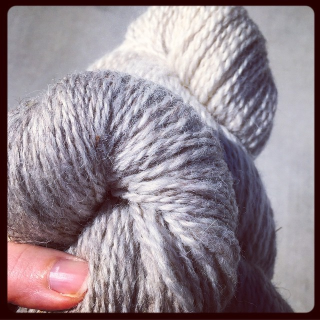 Just picked up @bluebirdlegacy's yarn from the fiber mill...and sold every last skein to Purl'sYarn Emporium. Stop in to squeeze it! It is SO GOOD.