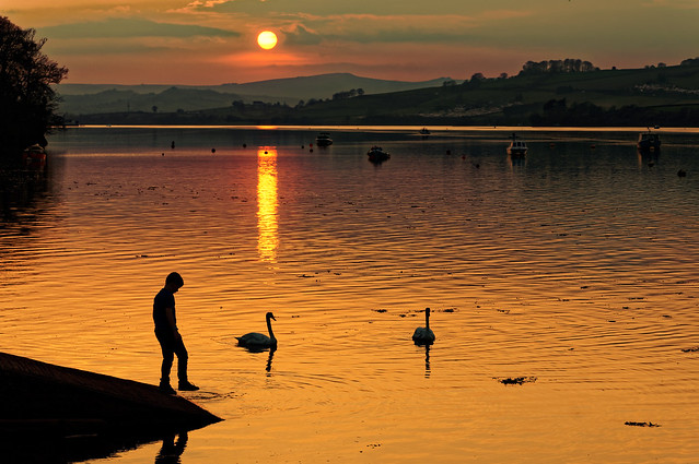 Sunset Boy with Swans.