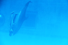 Dolphin show - Nagoya Aquarium - Japan