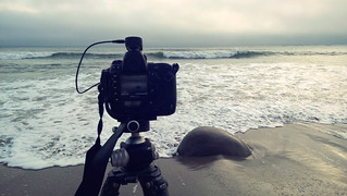 Bowling Ball Beach, CA | Roland Krinner