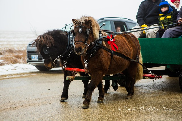 20141213-HolsteinChristmasParade-WM-23