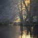 stroking last light from day by Jane Brown~