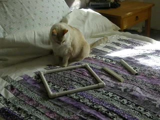 Oz Playing with Quilt Frame