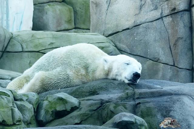 Tierpark Hagenbeck 17.107_wm