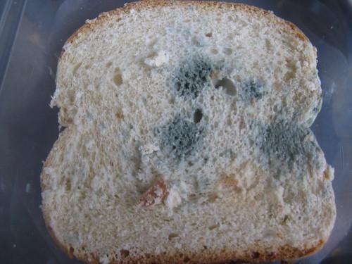 The bread mould project, Anna, Grade 9