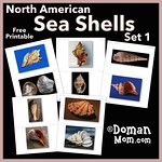 Free Sea Shells Flash Cards (set 1)