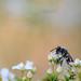 Smelling flower by Mayur Kotlikar