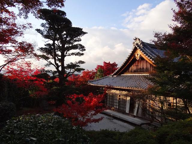 Kyoto Momiji 2014 Ichijoji 71