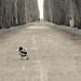 All by myself.... by Fraila