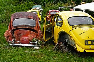 Rusty Treasures VWs