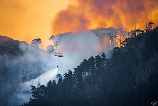 Cape Town Burns