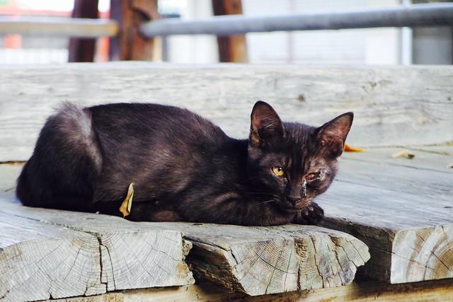 Today's Cat@2016-09-03