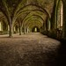 Inside Fountains Abbey by 21mapple