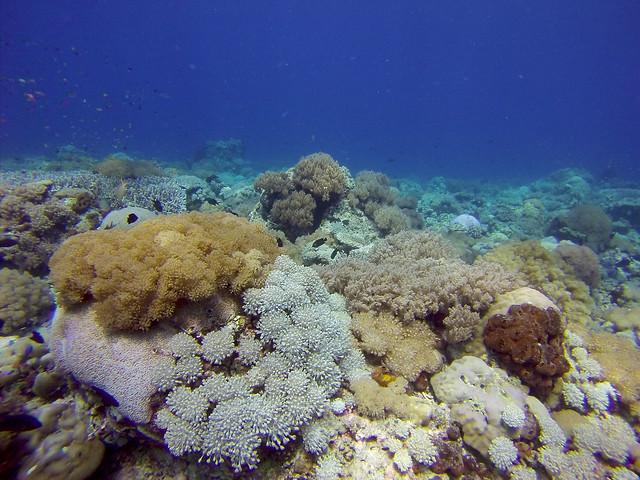 Labuan Aji Reef | Moyo Island